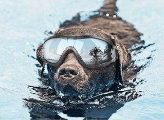 protection dog goggles // tread magazine