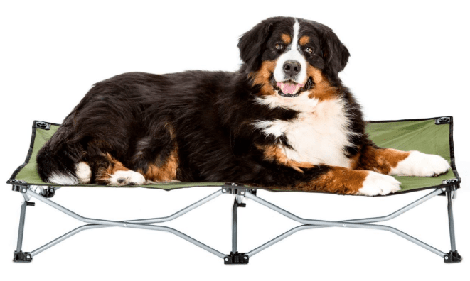elevated dog bed in camping essentials for dogs