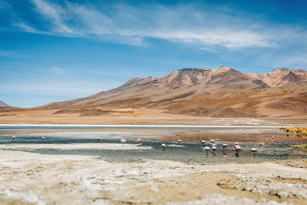 Flamingos in the high plains of Bolivia