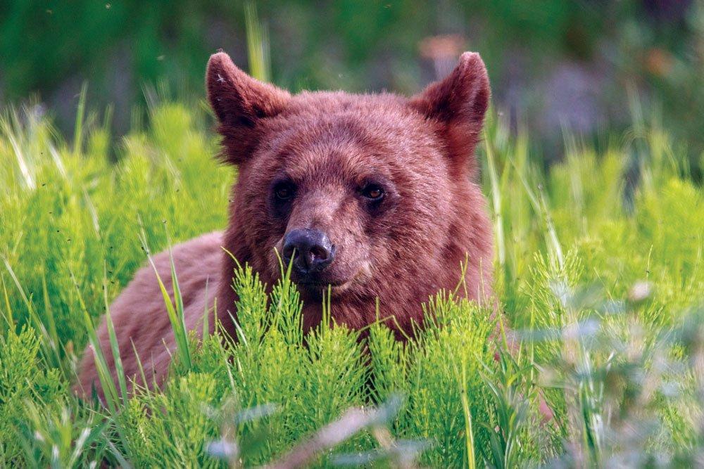 Seeing a bear while exploring the Yukon