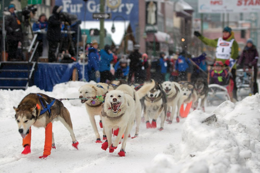 48th annual Iditarod dog sled races