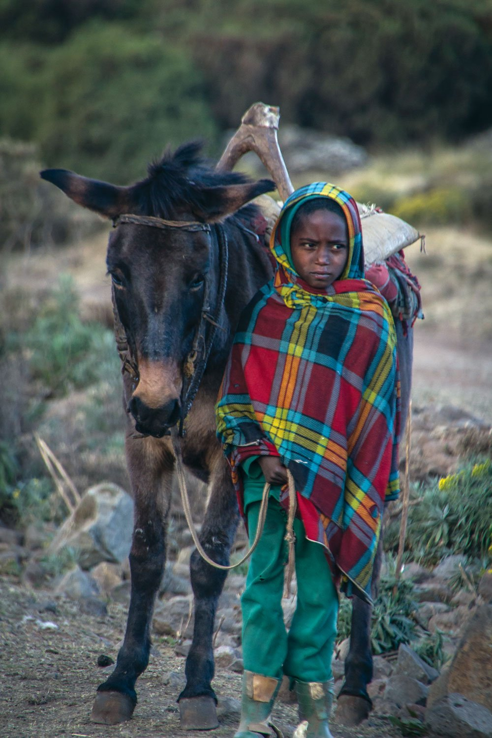 An Ethiopian local leading a mule