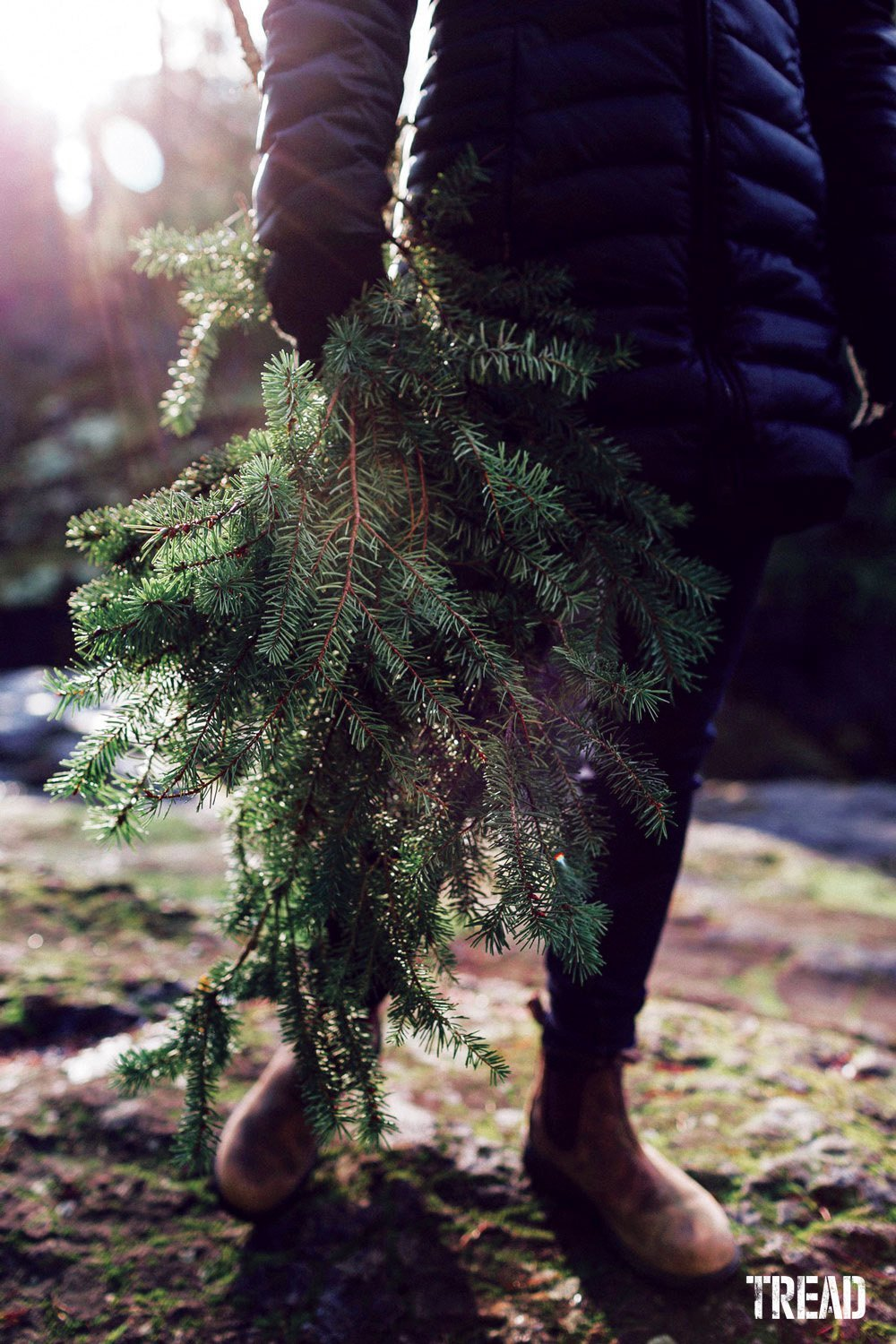 When foraging, gather fresh fallen boughs rather than taking from the tree itself