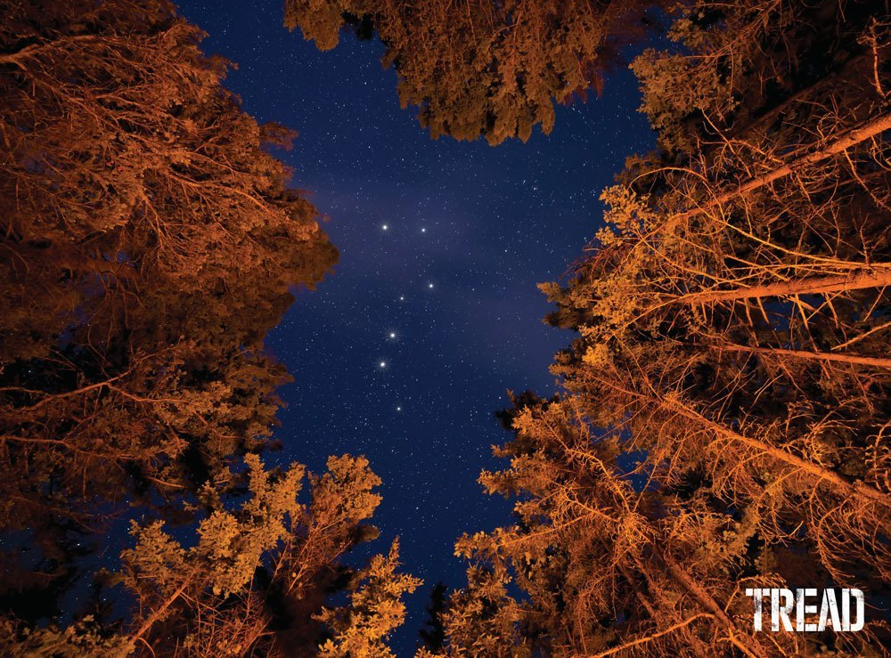 Large pine trees with Little Dipper constellation