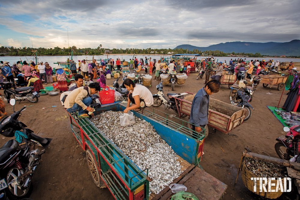 A fish market in Southern Cambodia.