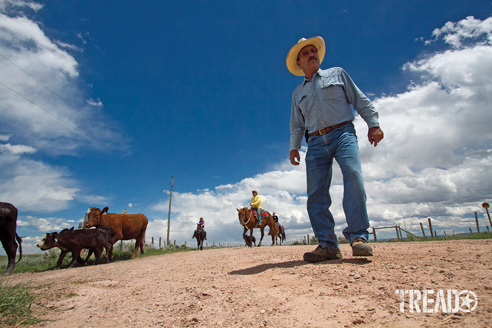 Multiple cowboys, one standing and others on horses round up cattle.
