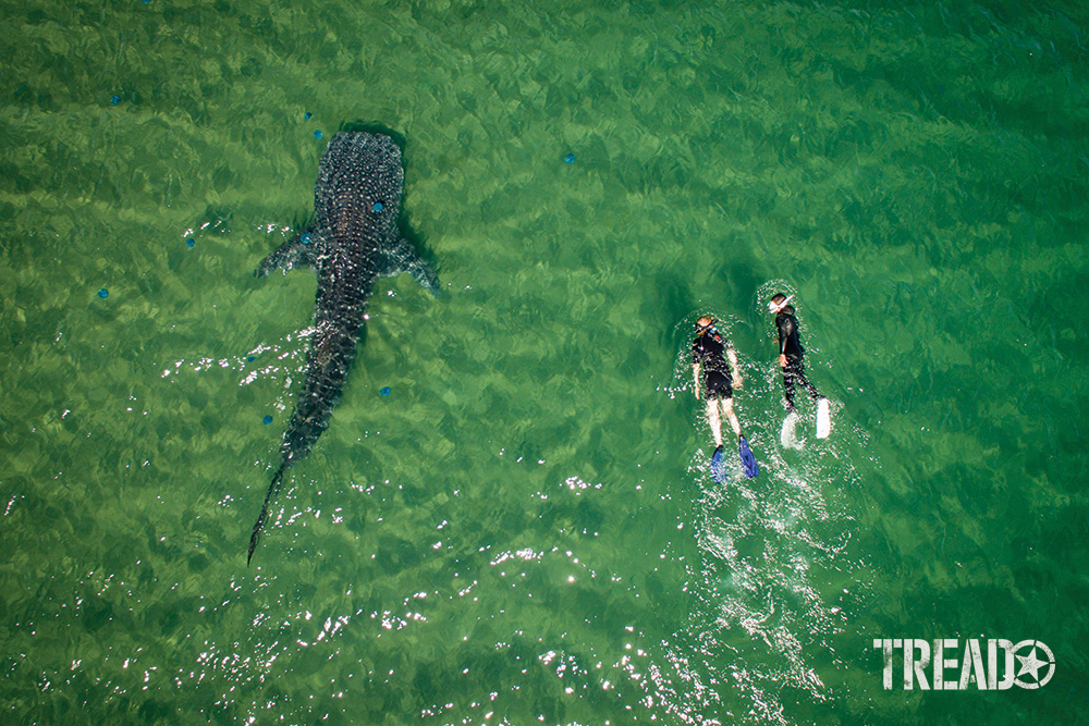 The drone operator captured his wife and a friend courting a whale shark in the green waters of the Sea of Cortez.